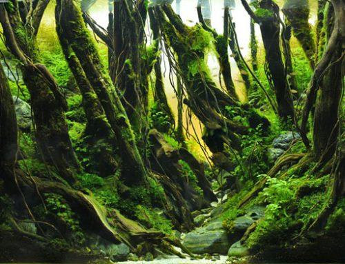 """""""Flow"""" by Yoda"""