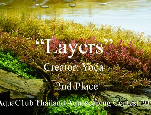 """Layers"" by Yoda"