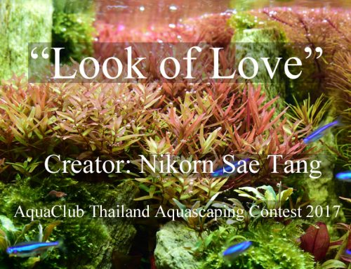 """Look of Love"" by Nikorn Sae Tang"